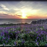 Bluebell sea sunset